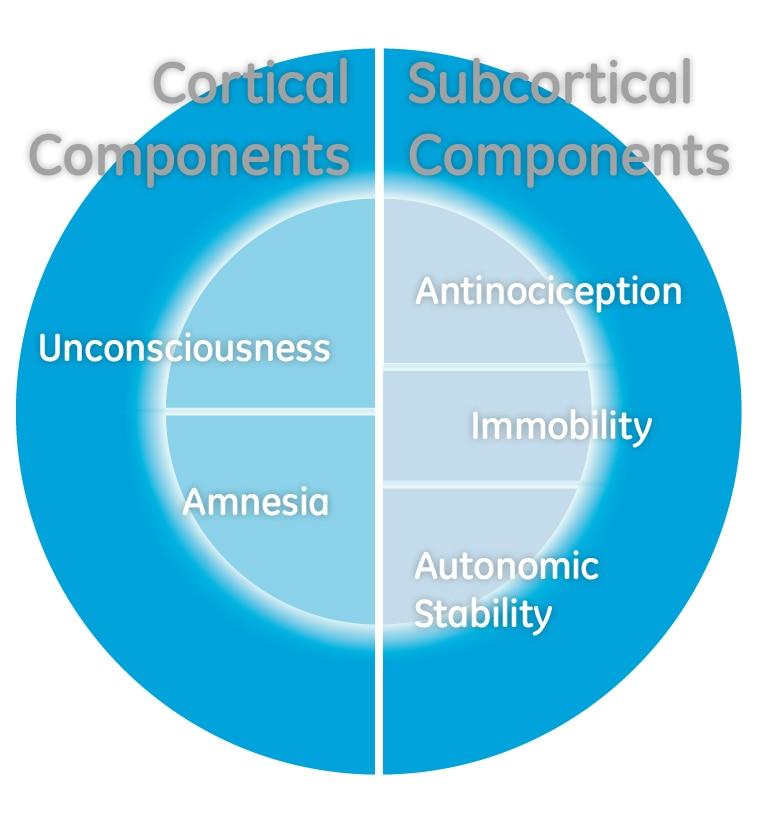 соответствие кортикальных и субкортикальных компонентов анестезии.